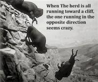 when the herd